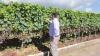 Vignoble suisse : un pas vers le bio