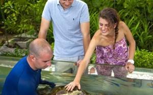 Le Gaya Island Resort crée le plus important centre de sauvetage et de réhabilitation des tortues en Malaisie
